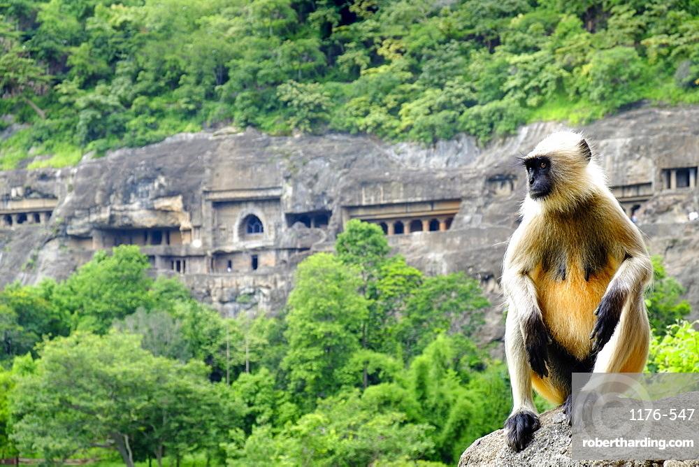 Grey langur monkey (Hanuman Langur) (Semnopithecus sp.) outside the Ajanta Caves, UNESCO World Heritage Site, Maharashtra, India, Asia