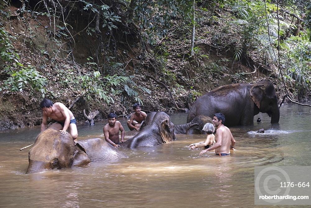 Elephant Sanctuary, Mondulkiri, Cambodia, Indochina, Southeast Asia, Asia