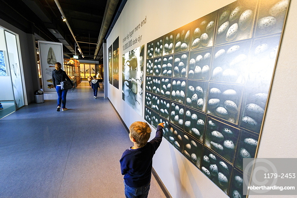 Child looks at panels on the wall, Zoological Museum, University of Copenhagen, Denmark, Europe