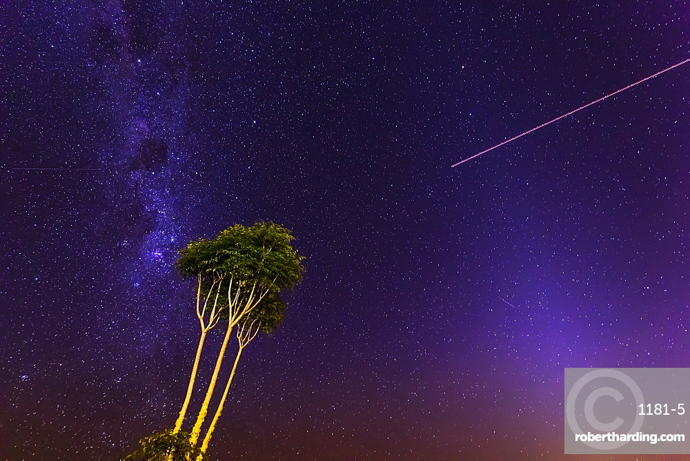 Milky Way with a tree at Lamington National Park, Queensland, Australia, Pacific