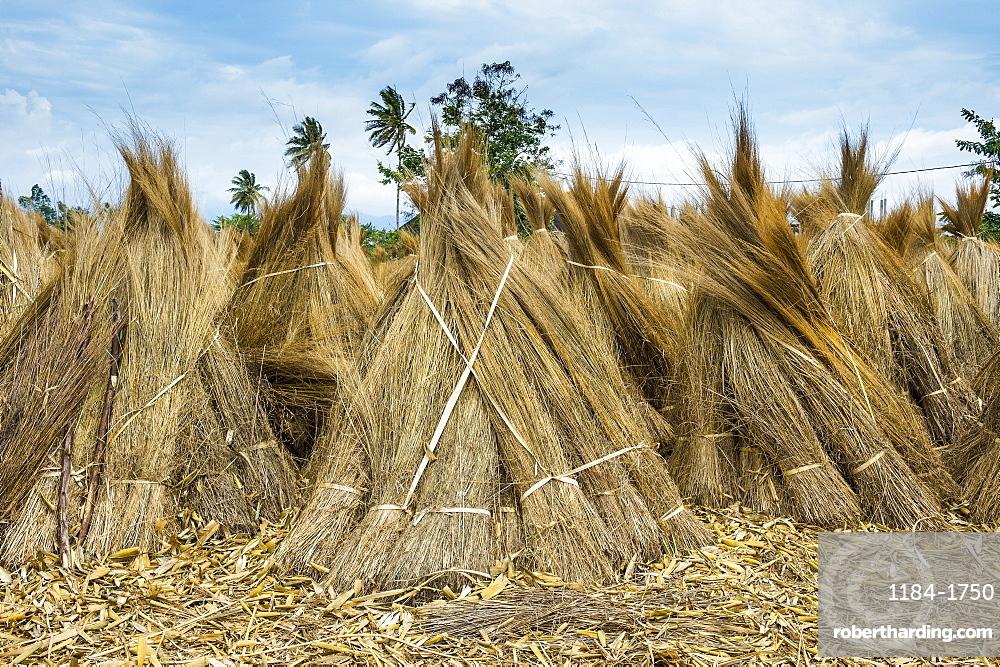 Reeds for sale on the shores of Lake Tanganyika, Bujumbura, Burundi, Africa
