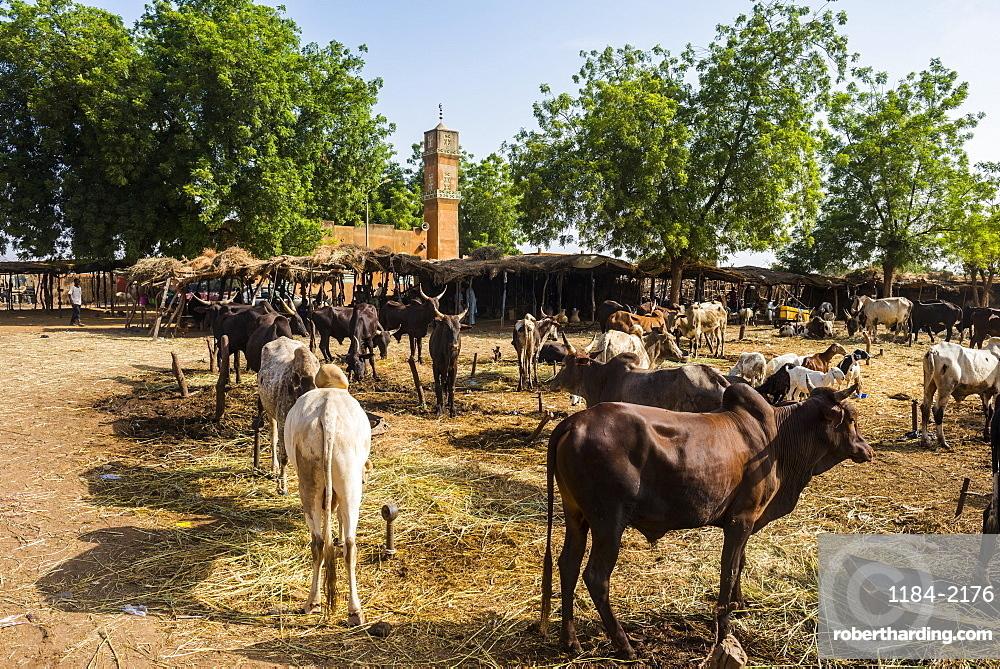 Animal market in Niamey, Niger, Africa