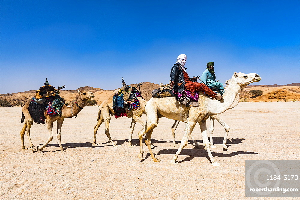 Tuaregs riding on their camels, near Tamanrasset, Algeria, North Africa, Africa