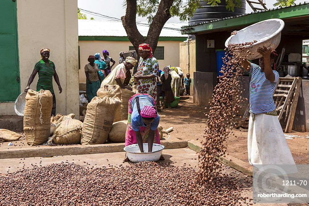 The women of Kasalagu Womens Cooperative drying clean Shea nuts to make Organic Shea butter for Tama, Tamale, Northern Region, Ghana, West Africa, Africa