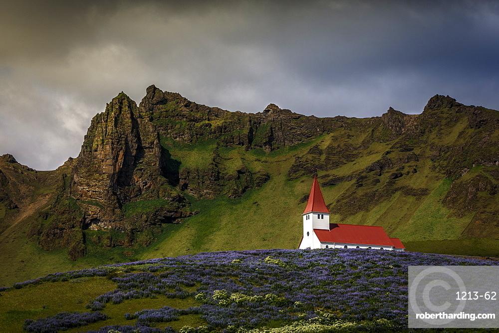 Vik church and lupine flowers, South Region, Iceland, Polar Regions