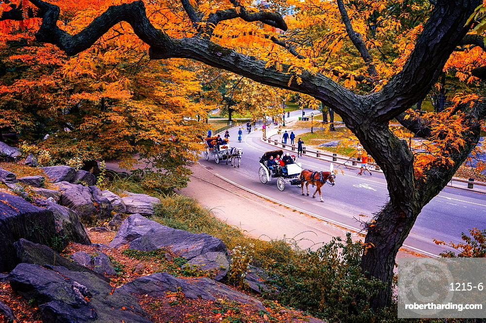 Carriage ride, Central Park, New York City, United States of America, North America