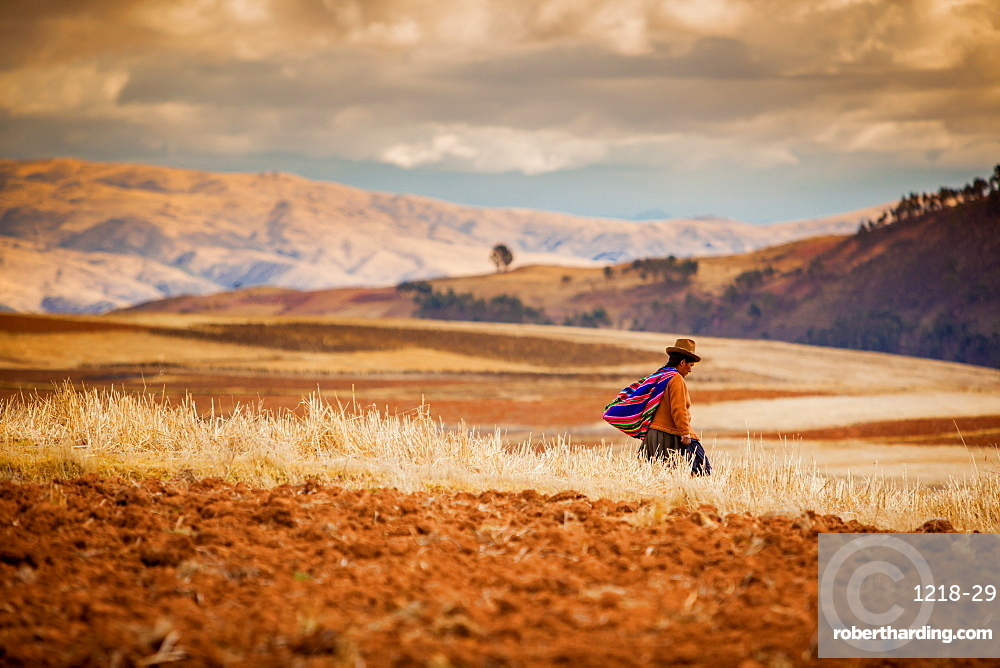 Farmer walking home at sunset, Sacred Valley, Peru, South America