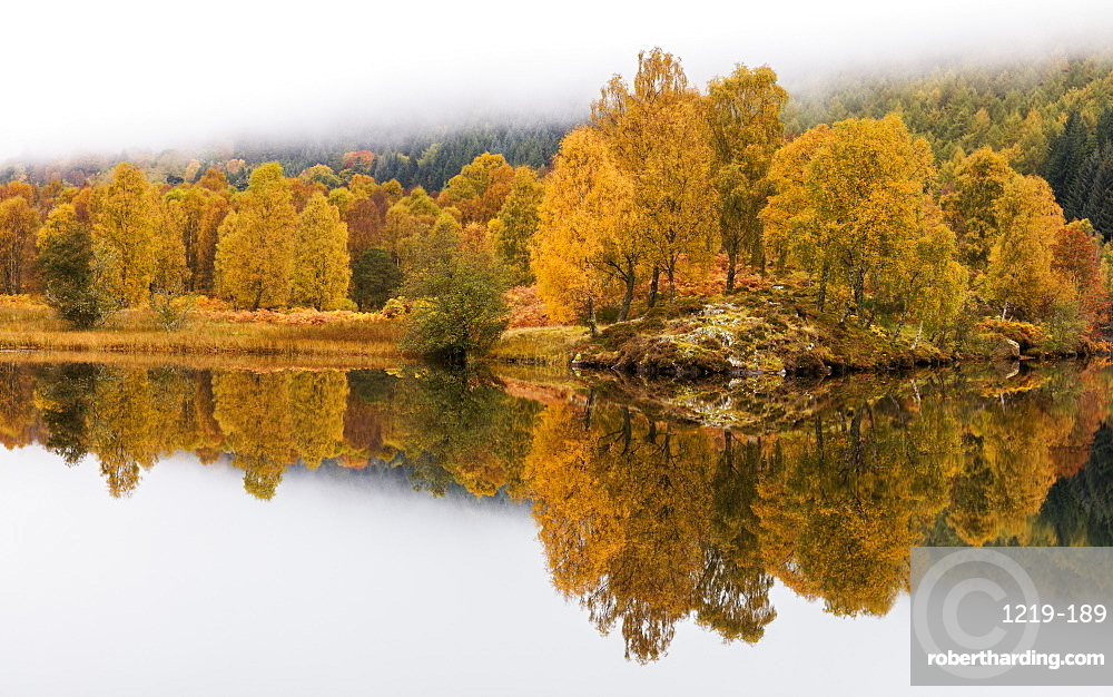 Golden colour of autumn with trees and fog reflected in Loch Tummel, Pitlochry, Perthshire, Scotland, United Kingdom, Europe