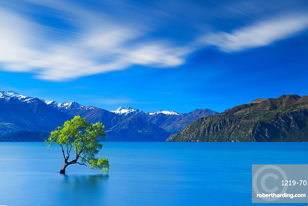 A lone tree stands defiantly within the waters of Lake Wanaka with the snow capped peaks of Mount Aspiring National Park beyond, Otago, South Island, New Zealand, Pacific