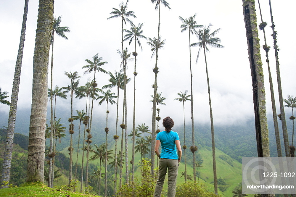 Standing among Wax palms which are the highest in the world in the Cocora valley, Colombia, South America