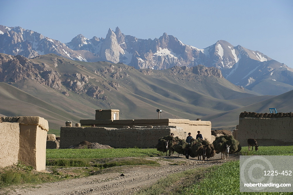 Farmers return to their village with their donkeys loaded with fodder in Bamiyan Province, Afghanistan, Asia