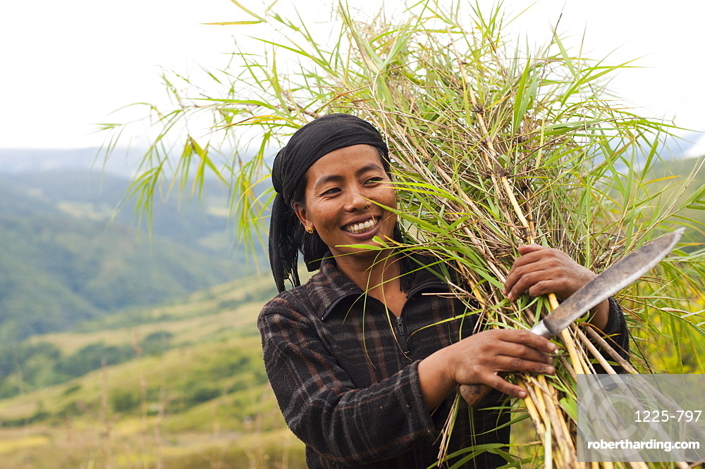 A woman harvests thin bamboo which she will use to make trellising in Manipur, India, Asia