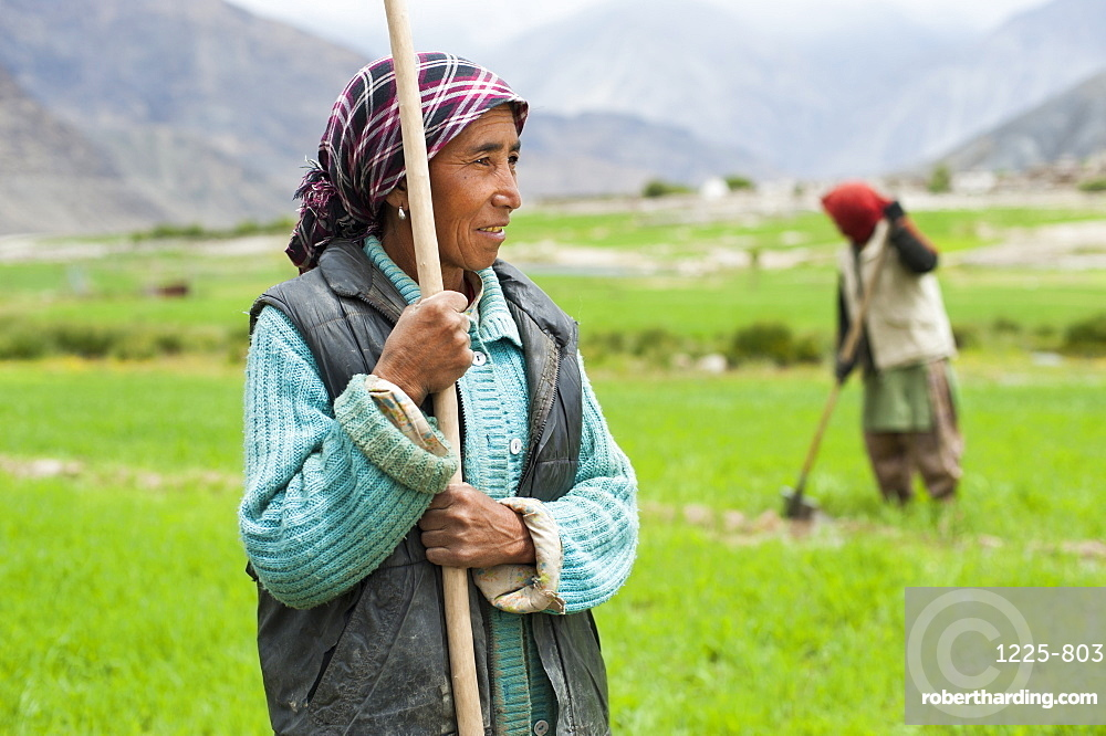 Women work with irrigation tools to even the flow of water into their wheat field, Ladakh, India, Asia