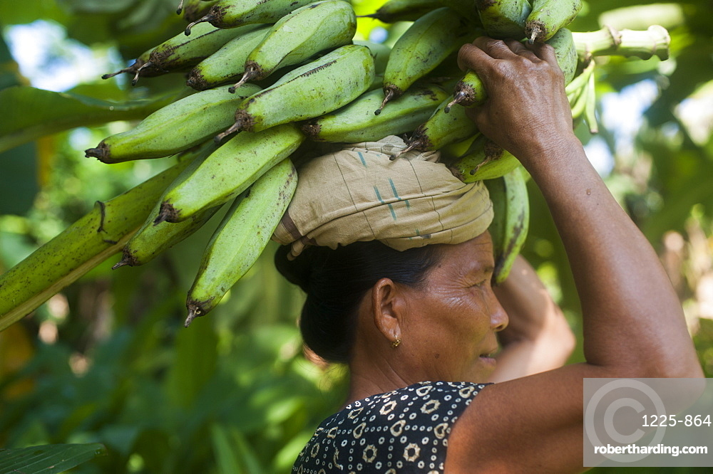 A woman carries freshly harvested bananas on her head, Chittagong Hill Tracts, Bangladesh, Asia