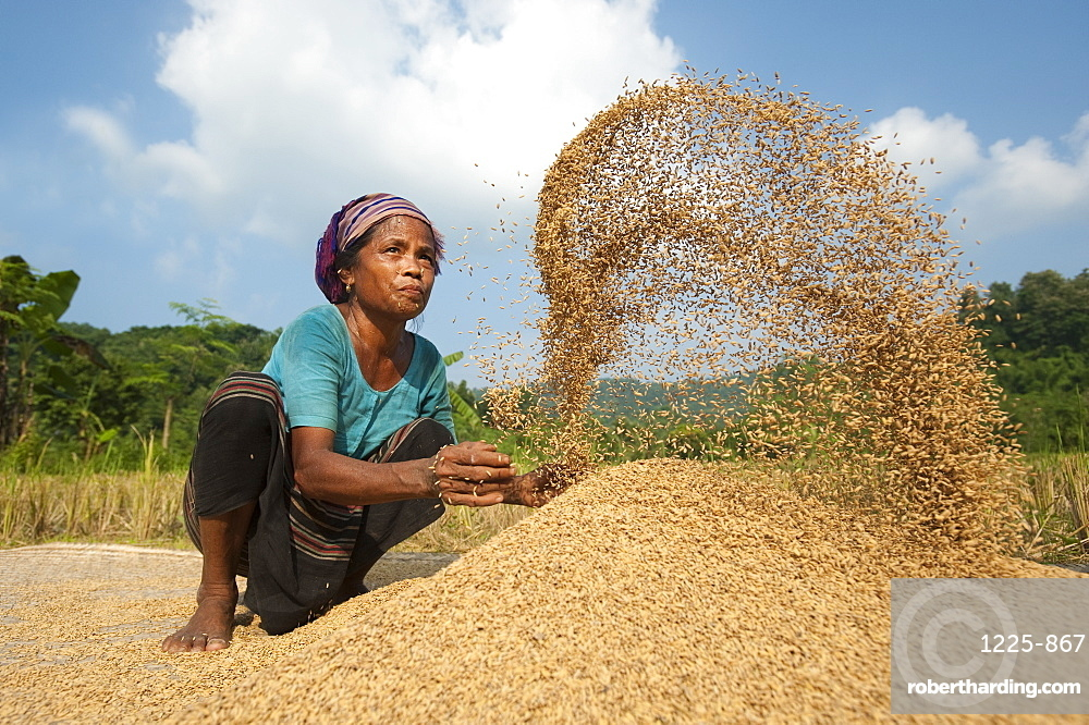 A woman throws rice up into the air with her hands while someone else fans air through, Chittagong Hill Tracts, Bangladesh, Asia