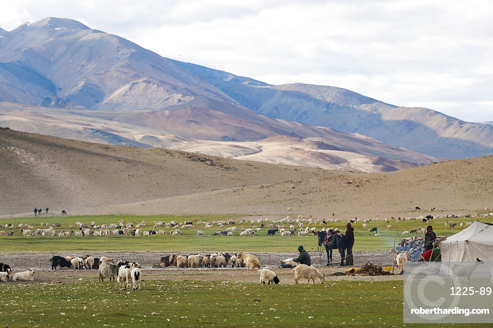 Nomads living in a tented camp near Tso Moriri in Ladakh, North India, India, Asia