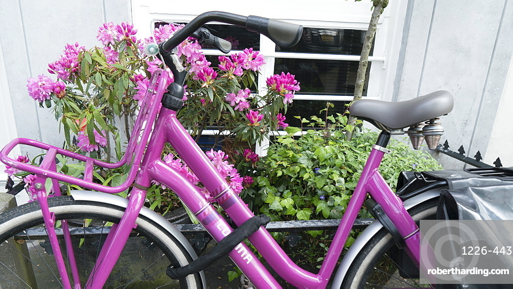 Pink bicycle and rhododendron, Amsterdam, Netherlands, Europe