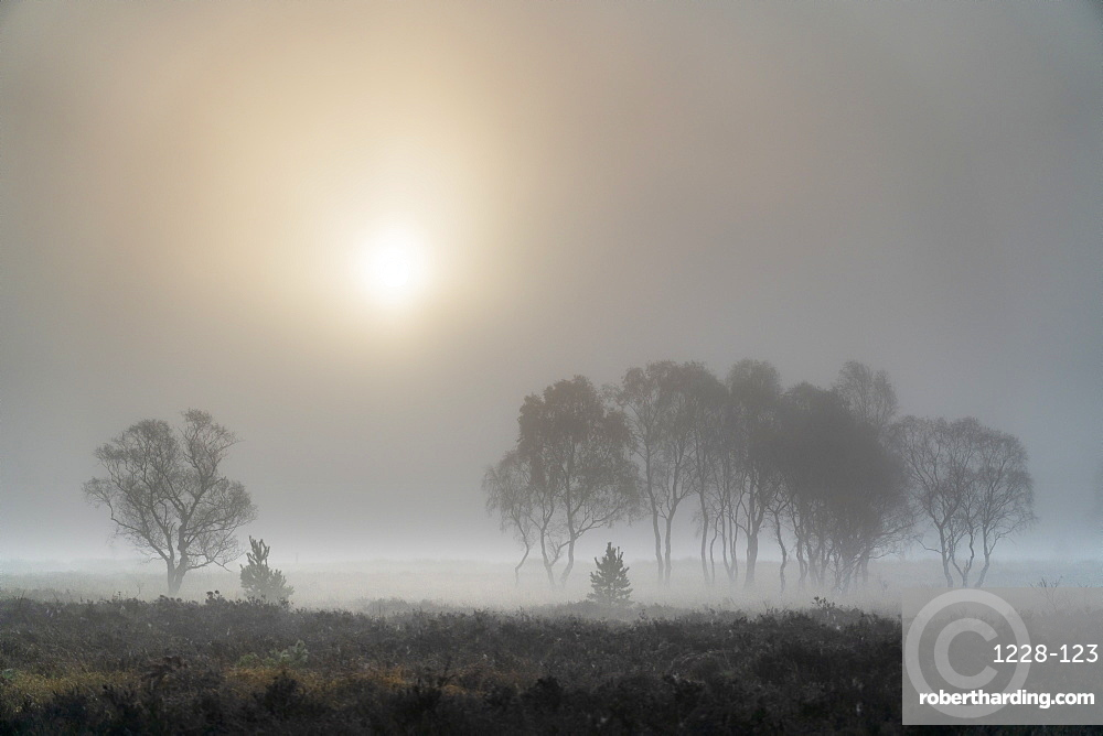 A misty autumn sunrise over Strensall Common Nature reserve near York, North Yorkshire, Yorkshire, England, United Kingdom, Europe