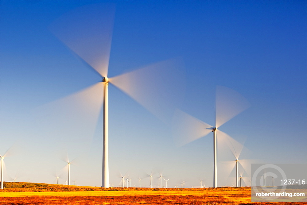Wind turbines, Whitelee Wind Farm, East Renfrewshire, Scotland, United Kingdom, Europe