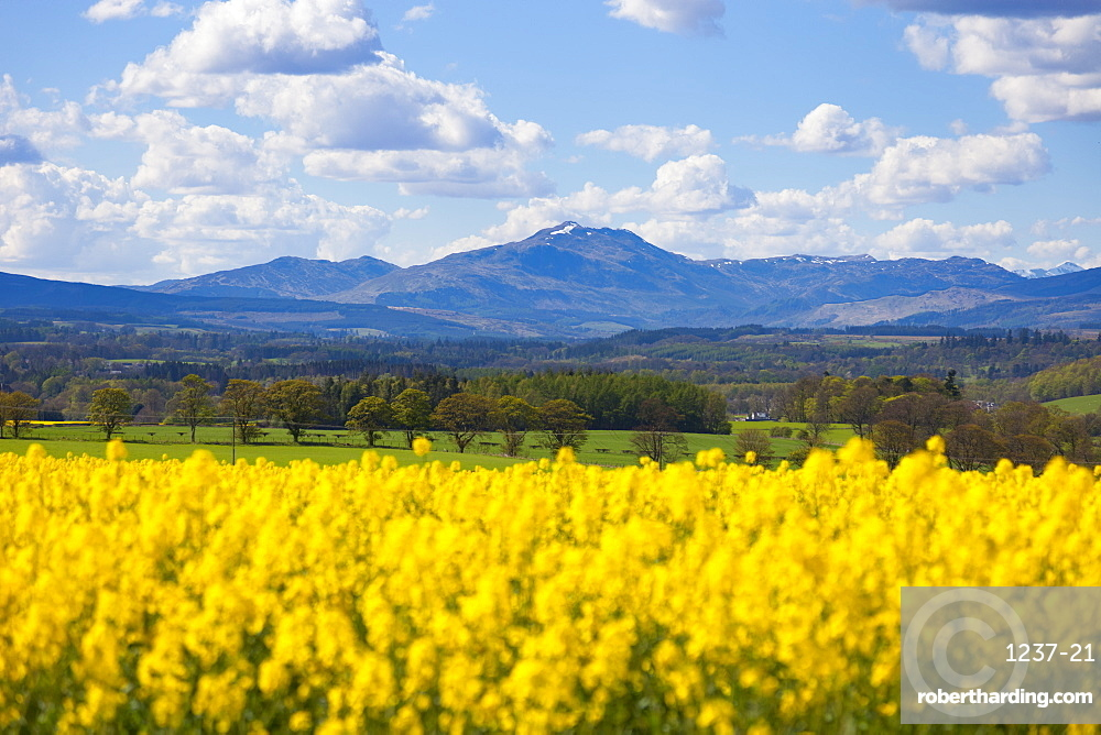 View of Perthshire Mountains and Rape field (Brassica napus) in foreground, Scotland, United Kingdom, Europe