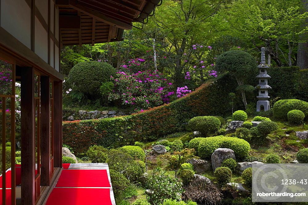 Rhododendron blooming in Zen garden, Sanzen-in Temple, Kyoto, Japan, Asia