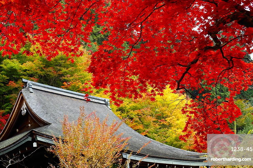 Jakko-in Temple main hall in autumn, Ohara valley, Kyoto, Japan, Asia