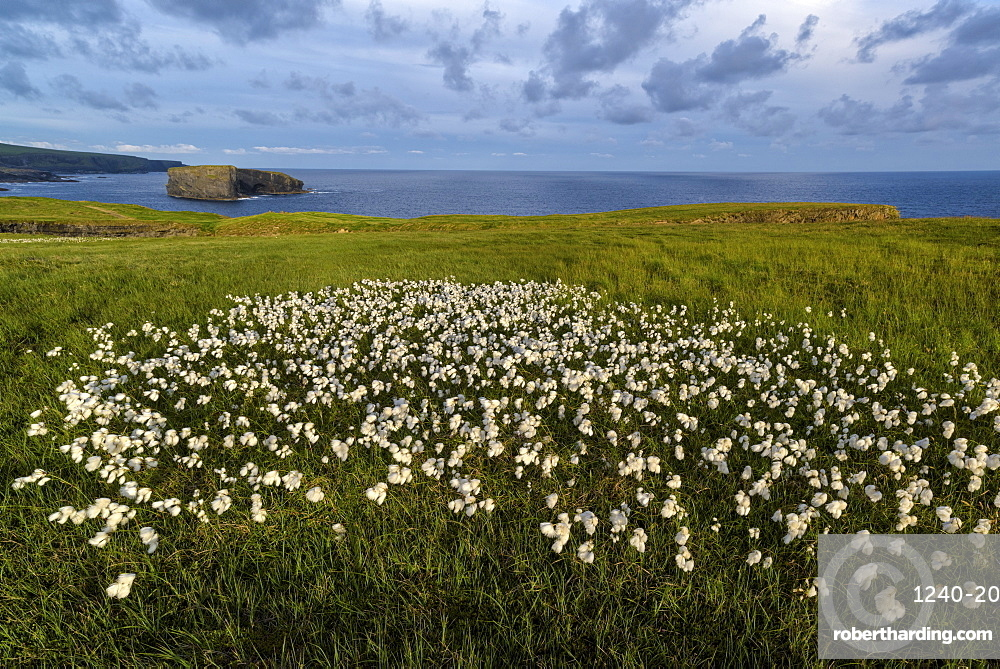 Castle Point, Loop Head, County Clare, Munster, Republic of Ireland, Europe