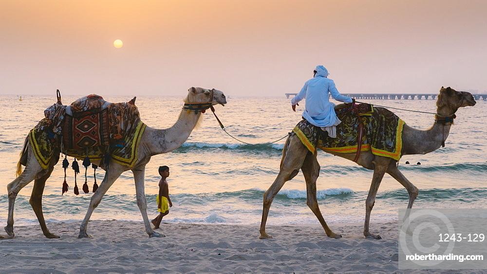 A young boy follows a man riding a camel in Dubai, United Arab Emirates, Middle East
