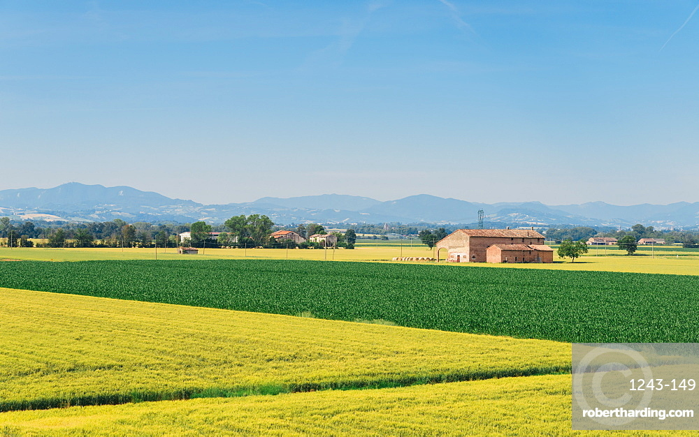 Wheat fields in the Emilia-Romagna region, Italy, Europe