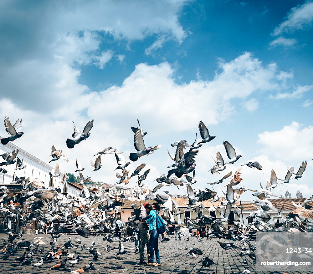 A flock of pigeons fly in front of San Francisco Square in the heart of Quito, Ecuador, South America