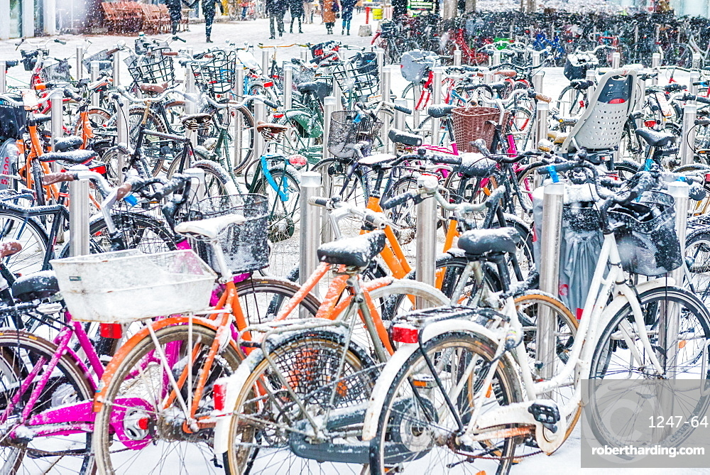 Snow covered bicycles, Copenhagen, Denmark, Scandinavia, Europe