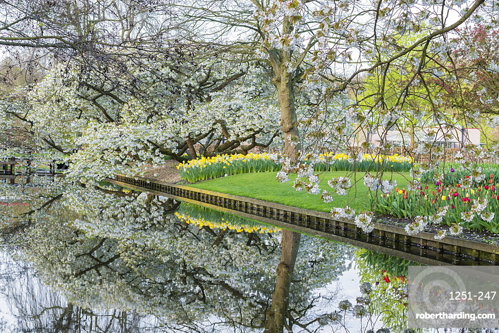 Tree, water canal and flowers at Keukenhof Gardens, Lisse, South Holland province, Netherlands, Europe