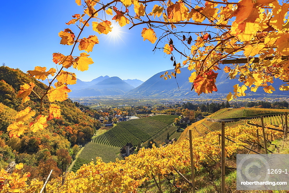 View of St. Valentin Church from vineyards, Merano, Val Venosta, Alto Adige-Sudtirol, Italy, Europe