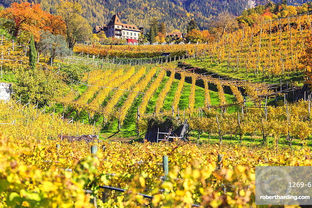 Labers Castle set in the middle of vineyards, Castel Labers, Merano, Val Venosta, Alto Adige-Sudtirol, Italy, Europe