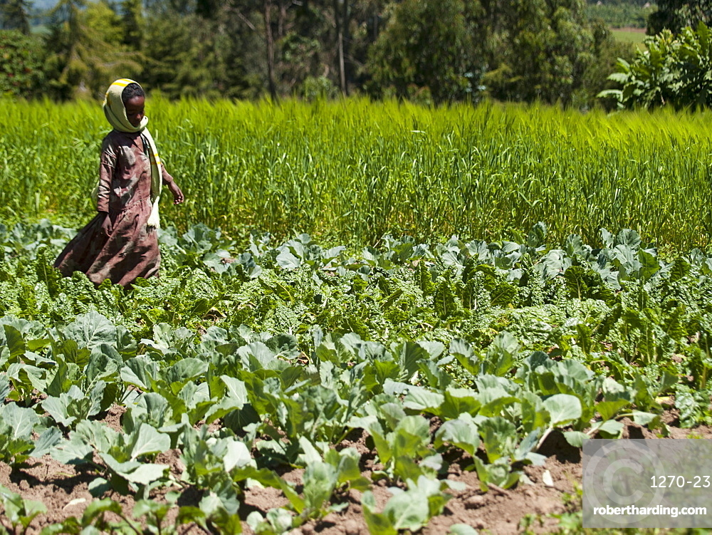 A young girl runs through a field of cabbages, Ethiopia, Africa