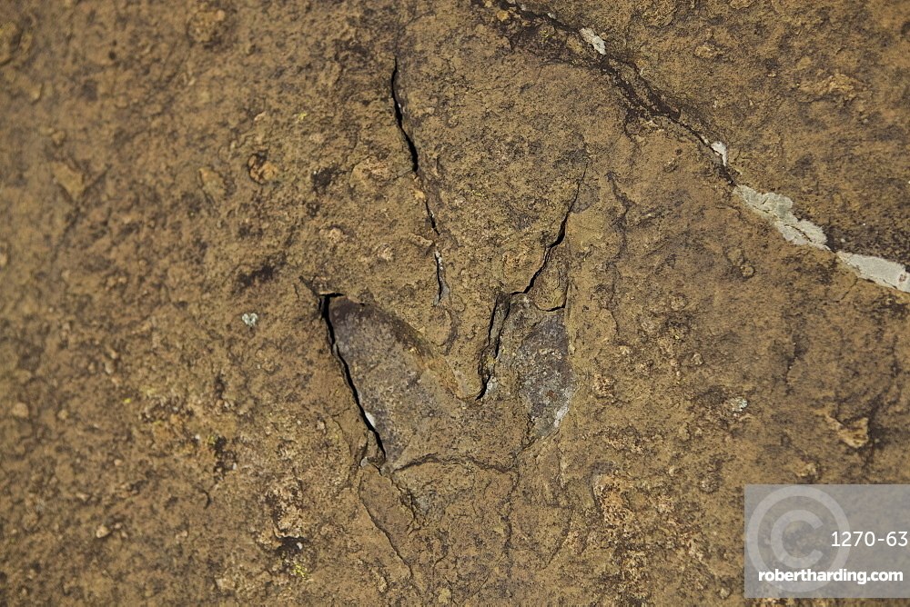 Dinosaur foot prints in the rock on the mountains behind Morija Guest house, Lesotho, Africa