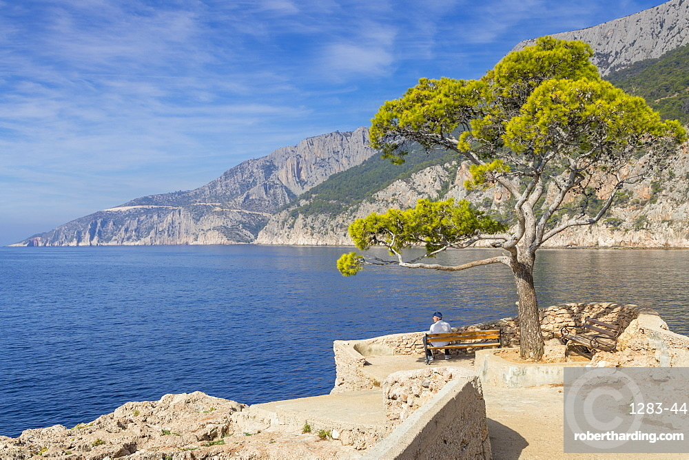Single pine tree at a scenic lookout in Sveta Nedjelja on Hvar Island, Croatia, Europe