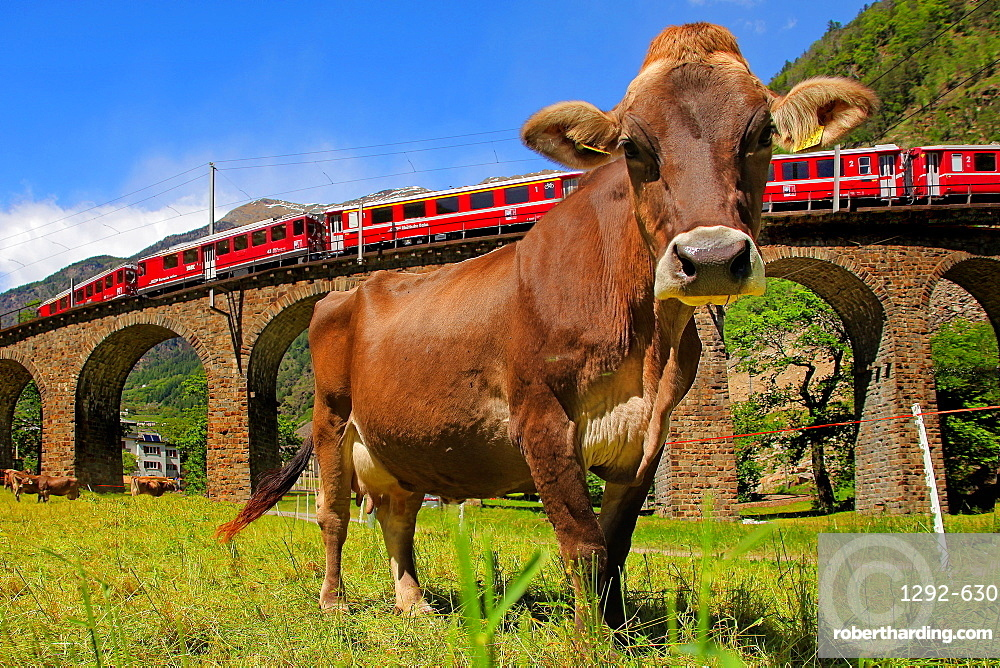The Bernina Express, Viaduct of Brusio, UNESCO World Heritage Site, Lombardy, Italy, Europe