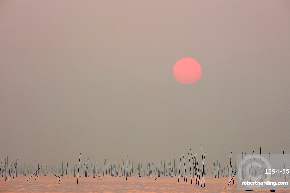 Xishan bay and beach at sunrise with bamboo sticks in the water, Fujian, China, Asia