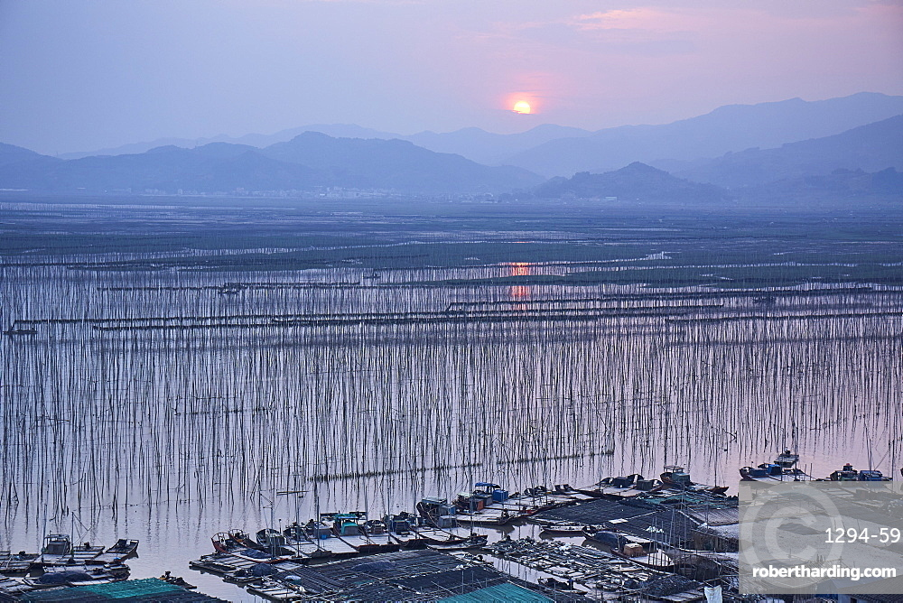 Sunset over Shajiang S Bay with endless rows of bamboo sticks to dry seaweed and kelp, Fujian, China, Asia