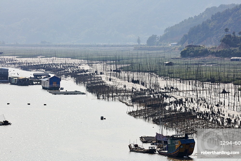 Floating village with aquaculture to cultivate seaweed and kelp, Fujian, China, Asia