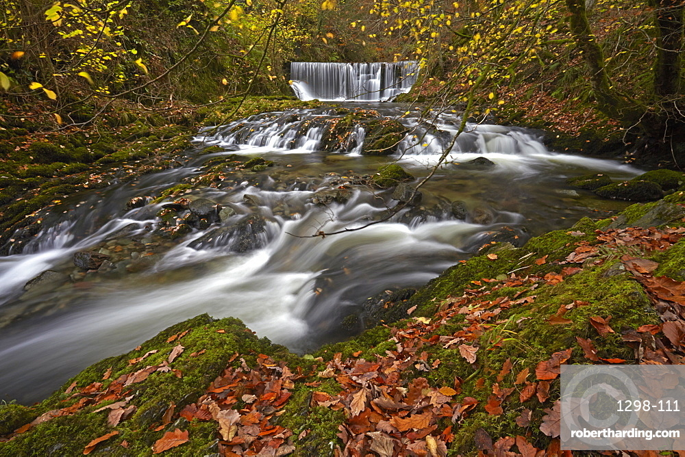 Autumn at Stock Ghyll beck, Ambleside, Lake District National Park, UNESCO World Heritage Site, Cumbria, England, United Kingdom, Europe