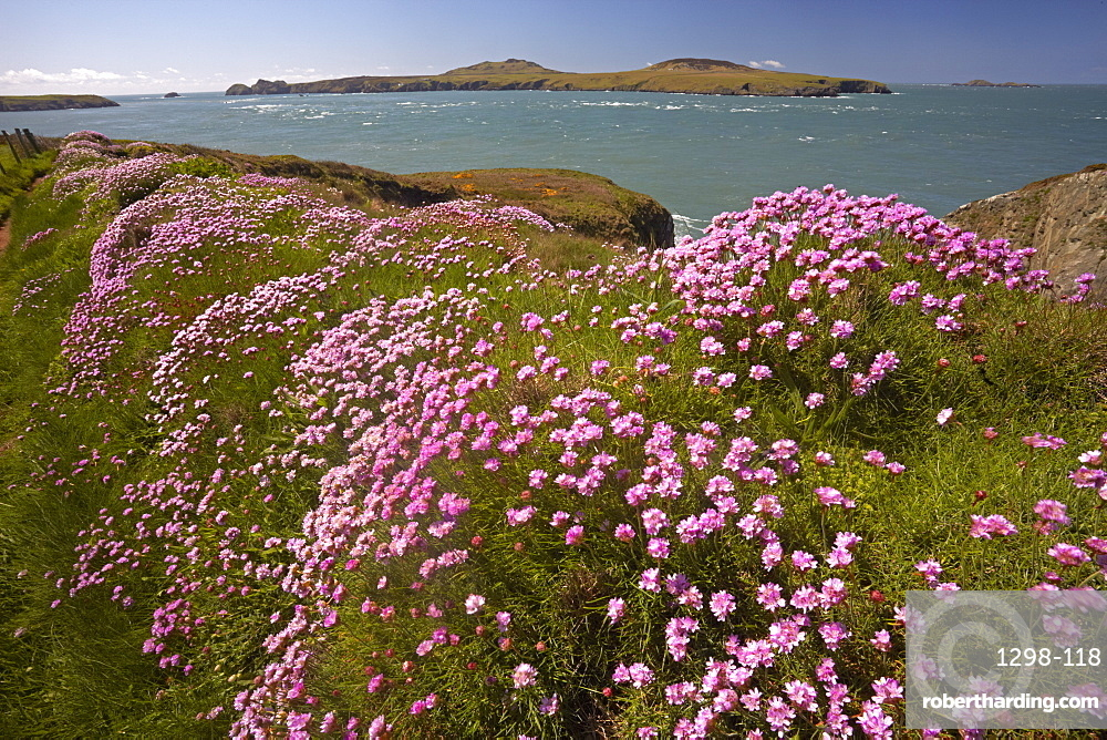 The coastal path along Ramsey Sound with Ramsey Island in the distance, Pembrokeshire, Wales, United Kingdom, Europe