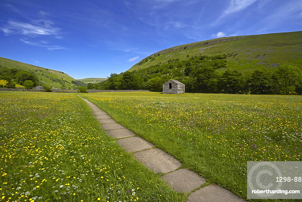 Path leading through traditional hay meadows, Muker, Swaledale, Yorkshire Dales, North Yorkshire, England, United Kingdom, Europe
