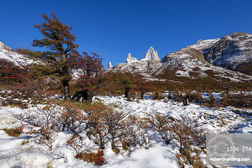 Mount Fitz Roy set with autumn colours and snow, UNESCO World Heritage Site, El Chalten, Patagonia, Argentina, South America
