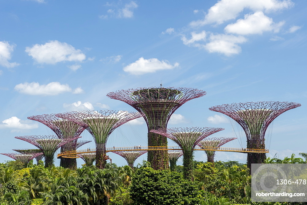 The Supertrees of Gardens by the Bay with high level walkway, Singapore, Southeast Asia, Asia