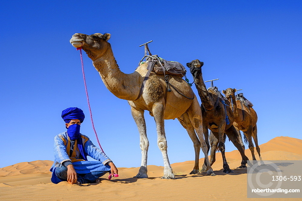 Berber and Camels, Sahara Desert, Morocco, North Africa, Africa
