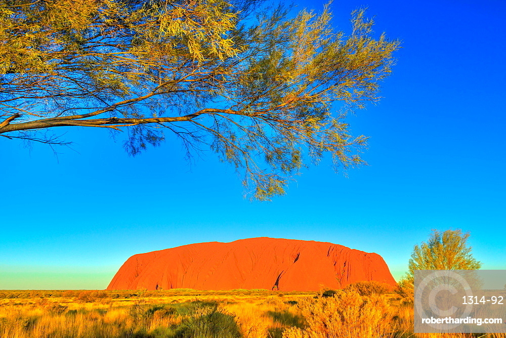 The bush vegetation in winter (dry season) frames the iconic red sandstone monolith called Uluru (Ayers Rock) in Uluru-Kata Tjuta National Park, UNESCO World Heritage Site, Northern Territory, Australia, Pacific