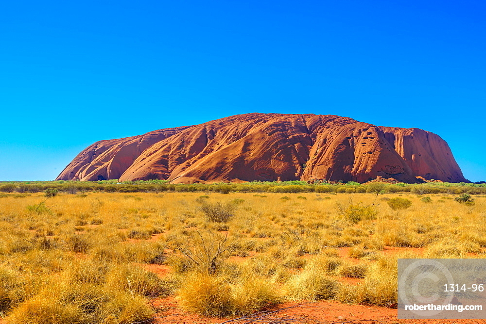 Red sand of Australian outback at Ayers Rock in dry season, huge sandstone monolith in Uluru-Kata Tjuta National Park, central Australia, Northern Territory. Icon of Red Centre. Blue sky, copy space.