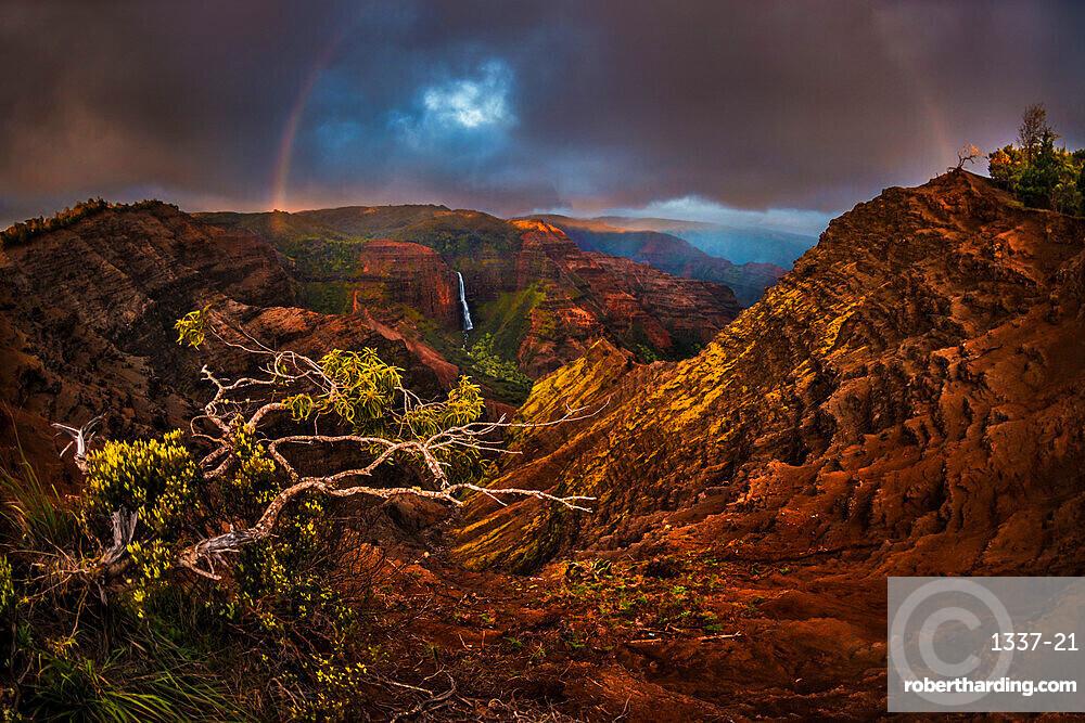 An Acacia Koa tree reaches out over the Waimea Canyon as a faint sunset rainbow stretches over Waipo'o Falls, Kauai, Hawaii, United States of America, Pacific